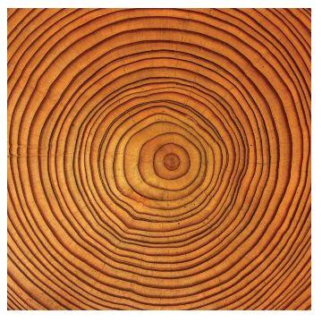 Thumbnail for Bäume für Leib und Seele