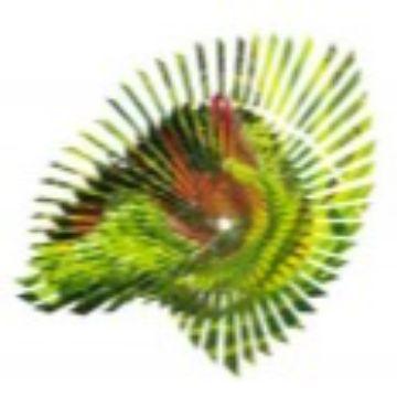 Thumbnail for FotoSynthesen - Ausstellung im 'mittendrin'