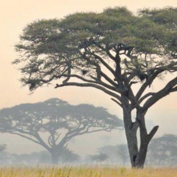 Thumbnail for Begegnungen mit Afrika